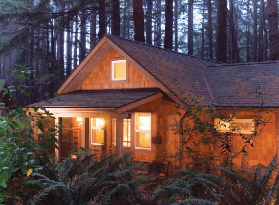 WildSpring Guest Habitat: The cabins are set in a peaceful forest of 100 ft trees