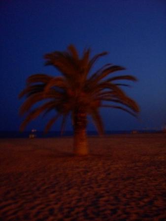 Calella, Spania: palmää