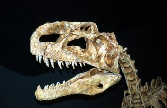 Museu Real de Tyrrel: Royal Tyrrell Museum of Palaeonthology - Drumheller (AB)