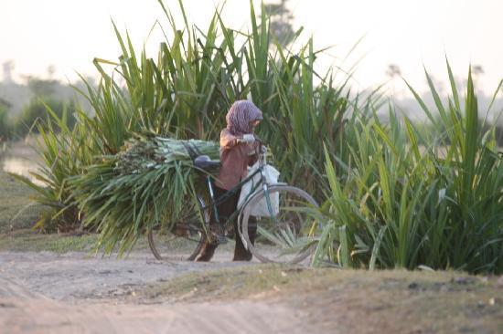 Quad Adventure Cambodia Siem Reap: Quad 5 - Siem Reap