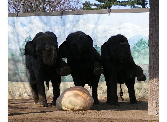 Siracusa, Estado de Nueva York: Elephants