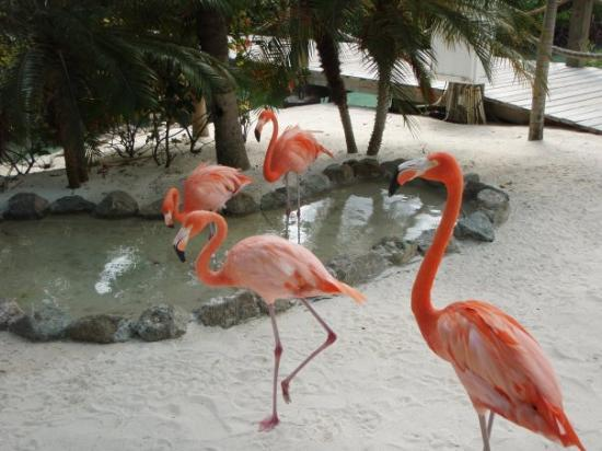 Asheville Nc Pink Flamingo Beach
