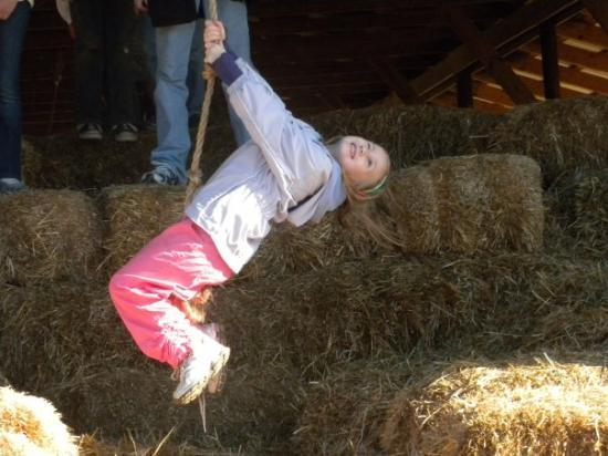 ‪‪Anderson‬, ساوث كارولينا: Hanging around the hay barn (Annika 6 years old).‬