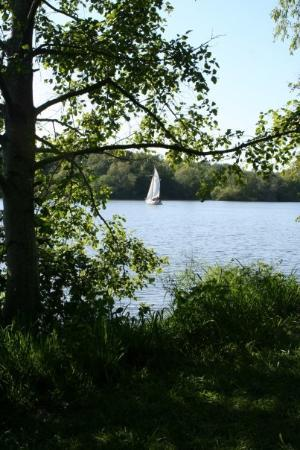 Santa Rosa, CA: A sailboat on the lake