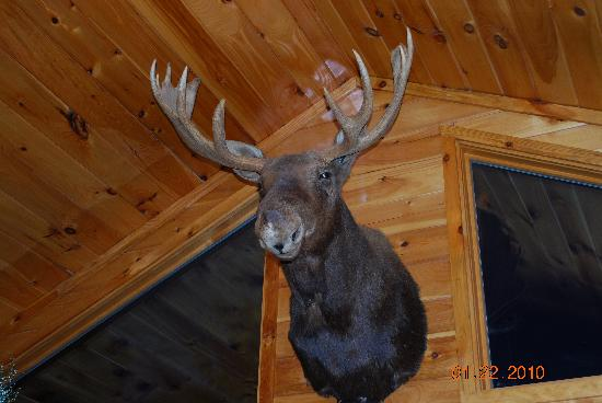 Adirondack Sports Center : there is lots of taxidermy in Gramp's cabin