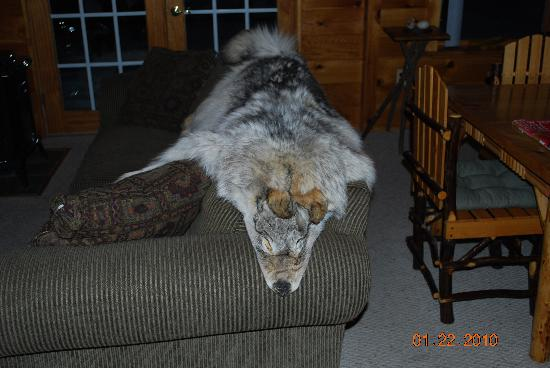 Adirondack Sports Center : furs and skins too.  Front room of Gramps Cabin
