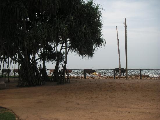 Royal Palms Beach Hotel: Strand am Morgen