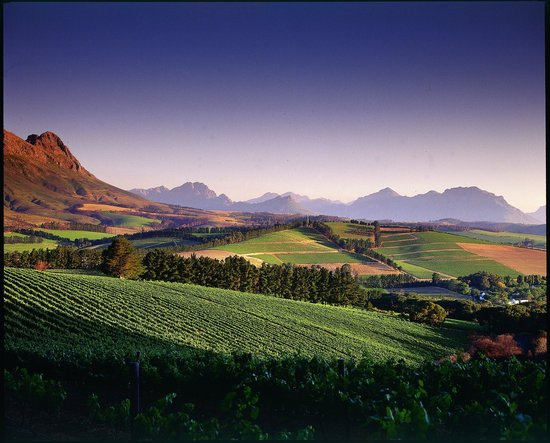 Stellenbosch, Zuid-Afrika: View on the 'BIG 5 WINE SAFARI'