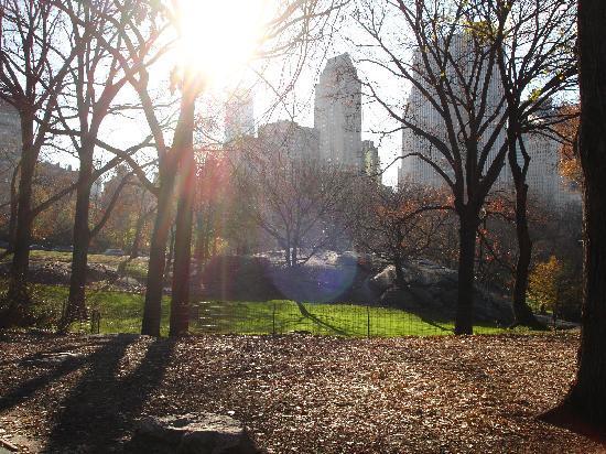Astor on the Park: Central Park