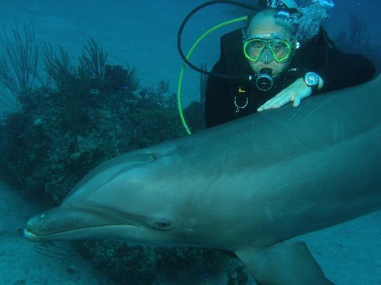Unexso: dolphin dive