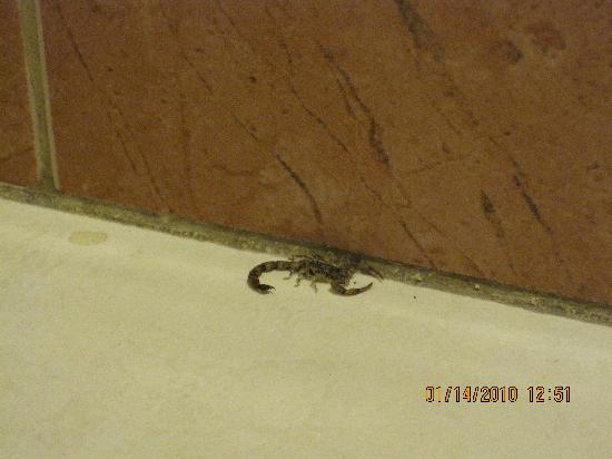 Scorpion In Bathroom Picture Of Albrook Inn Panama City