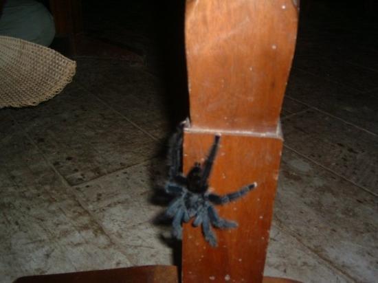 Tambopata National Reserve, Peru: Lovely unwelcome friend:-) Candamo Peru