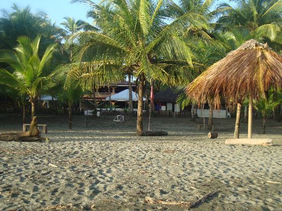 Hotel Playa Westfalia: Beautiful grounds