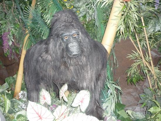Rainforest Cafe: Gorillas