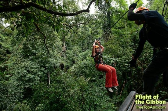 Flight of the Gibbon: Exhilarating Zip-lines In An Unbelievable Setting