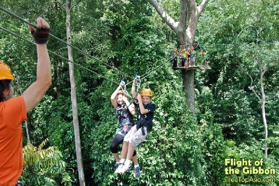 Flight of the Gibbon: Fun for both Adrenaline Junkies & Families