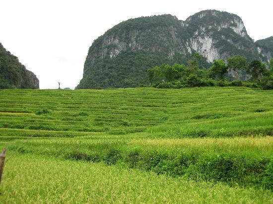 Mai Chau Day Trek: Rice terraces