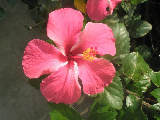 Palm Garden Beach Resort & Spa: there are many beutiful flowers