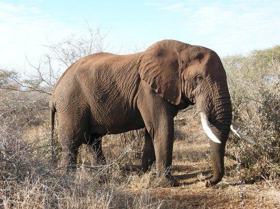 Phuza Moya Private Game Reserve