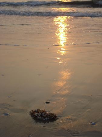 Malpe, الهند: Malpe Beach