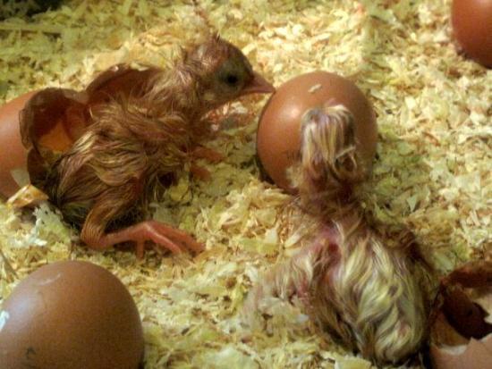 Science Centre Singapore: hatching