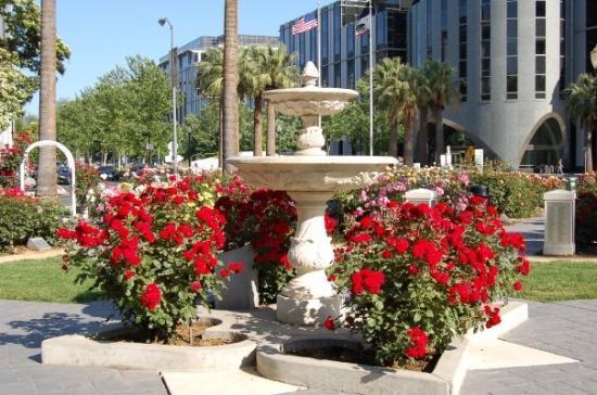 Sacramento, CA: Rose Garden In The Capitol Gardens