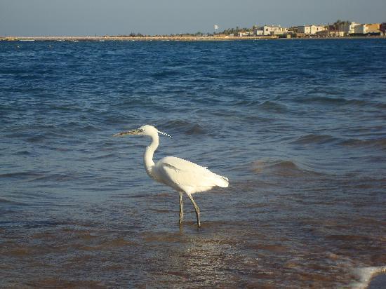 Iberotel Makadi Beach: hotel beach
