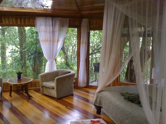 Hidden Canopy Treehouses Boutique Hotel: glade