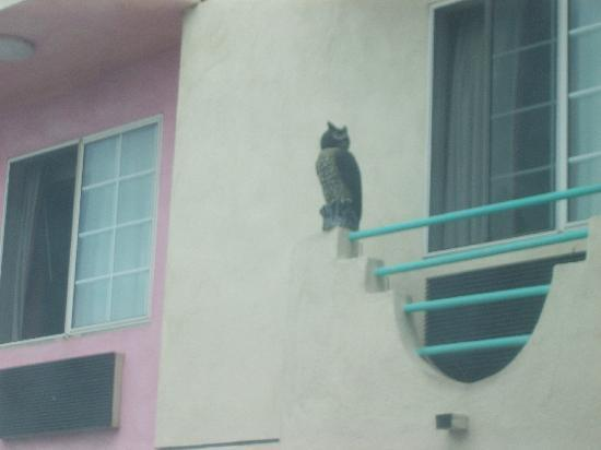 Days Inn Santa Monica/los Angeles: an owl at the balcony