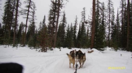 Friends Of Olney Dog Park