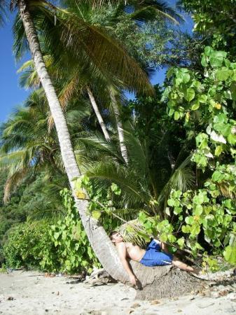 Bilde fra Dunk Island