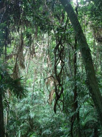 Dunk Island, Avustralya: Rainforest