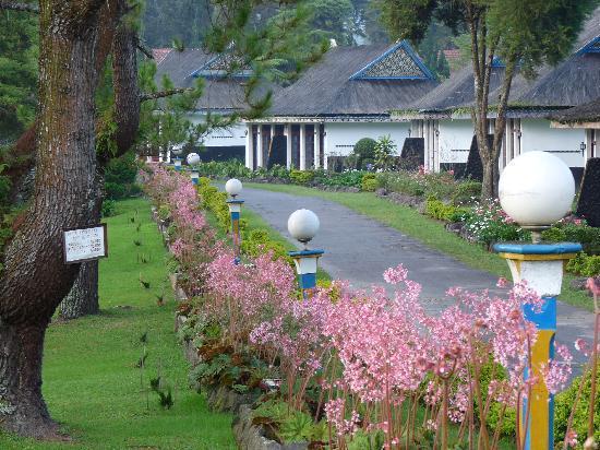 Berastagi Cottages : garden