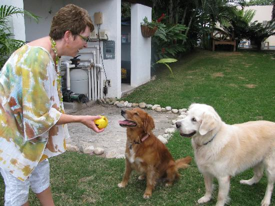 Casa Cielito Lindo Bed & Breakfast: Playing with the house dogs
