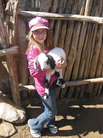 Tupungato, Argentinië: Baby goat