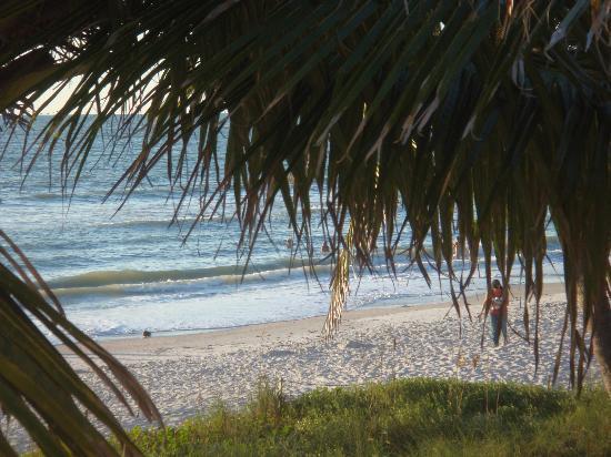 The Naples Beach Hotel & Golf Club: Beach and palm trees at Naples Beach Hotel