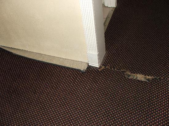 Travelodge by Fisherman's Wharf: Check this carpet!! dirty and broken!