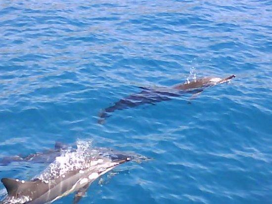 Ocean Eco Tours