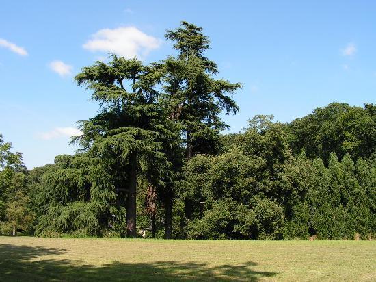 Domaine de Joreau : Vue sur le parc
