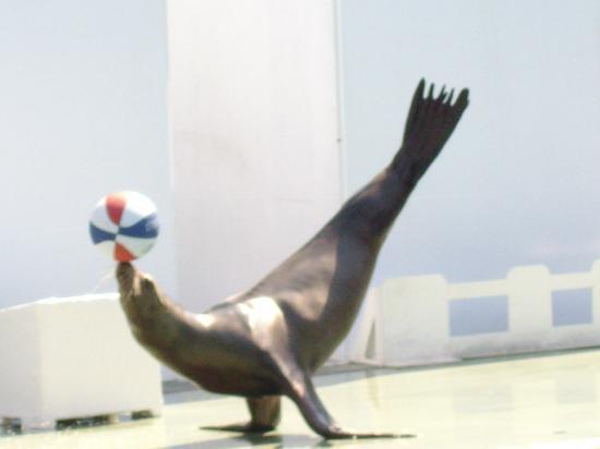 しながわ水族館の写真その1