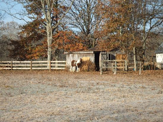 Mulberry, TN: the horse (next to the house)