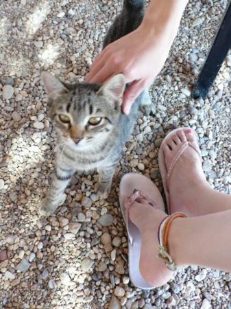Milos, Grecia: kitty wants to join our lunch party .