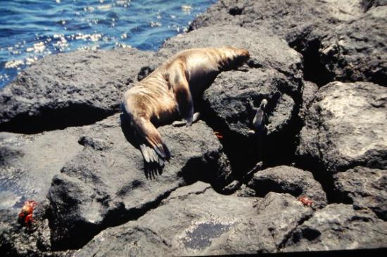 Santa Cruz, Ecuador: Galápagos-öarna (Ecuador), januari 2000
