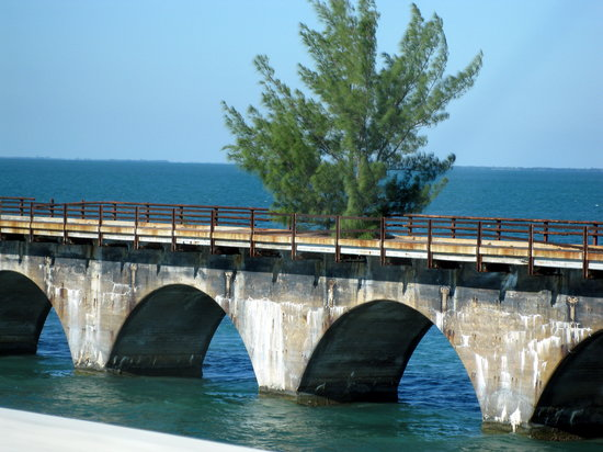 Key West, FL: Overseas Highway - tree on part of the old Seven Mile bridge