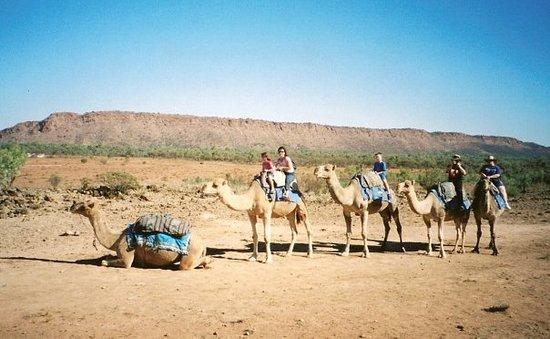 Frontier Camel Tours Alice Springs