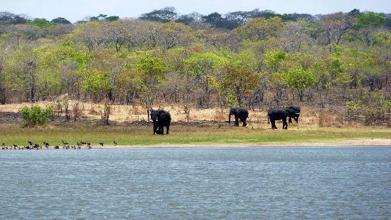 Lifupa Conservation Lodge : Elefanten am Lifupa See