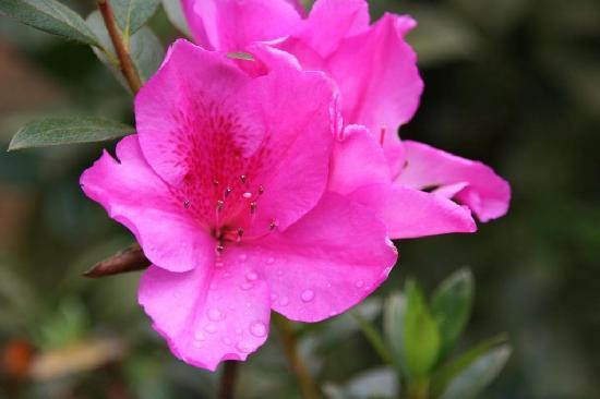 Rose Gardens Homestay: flower garden