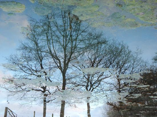 Cools Farm: the ponds reflection