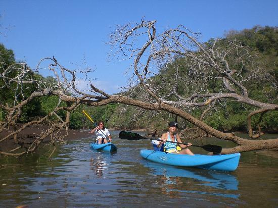 Samara Palm Lodge: Kanufahren durch die Mangroven