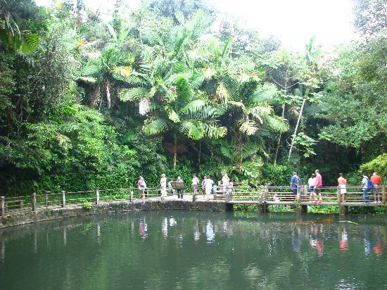 Puerto Rico Forest Tour